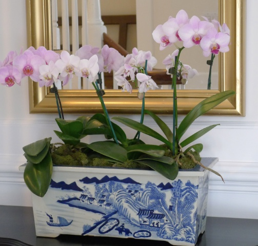 Using Multiple Orchids In One Pot Makes An Impact Of Color The Blue And White Pottery Can Be Used Any Room I Was Staying At A J W Marriott
